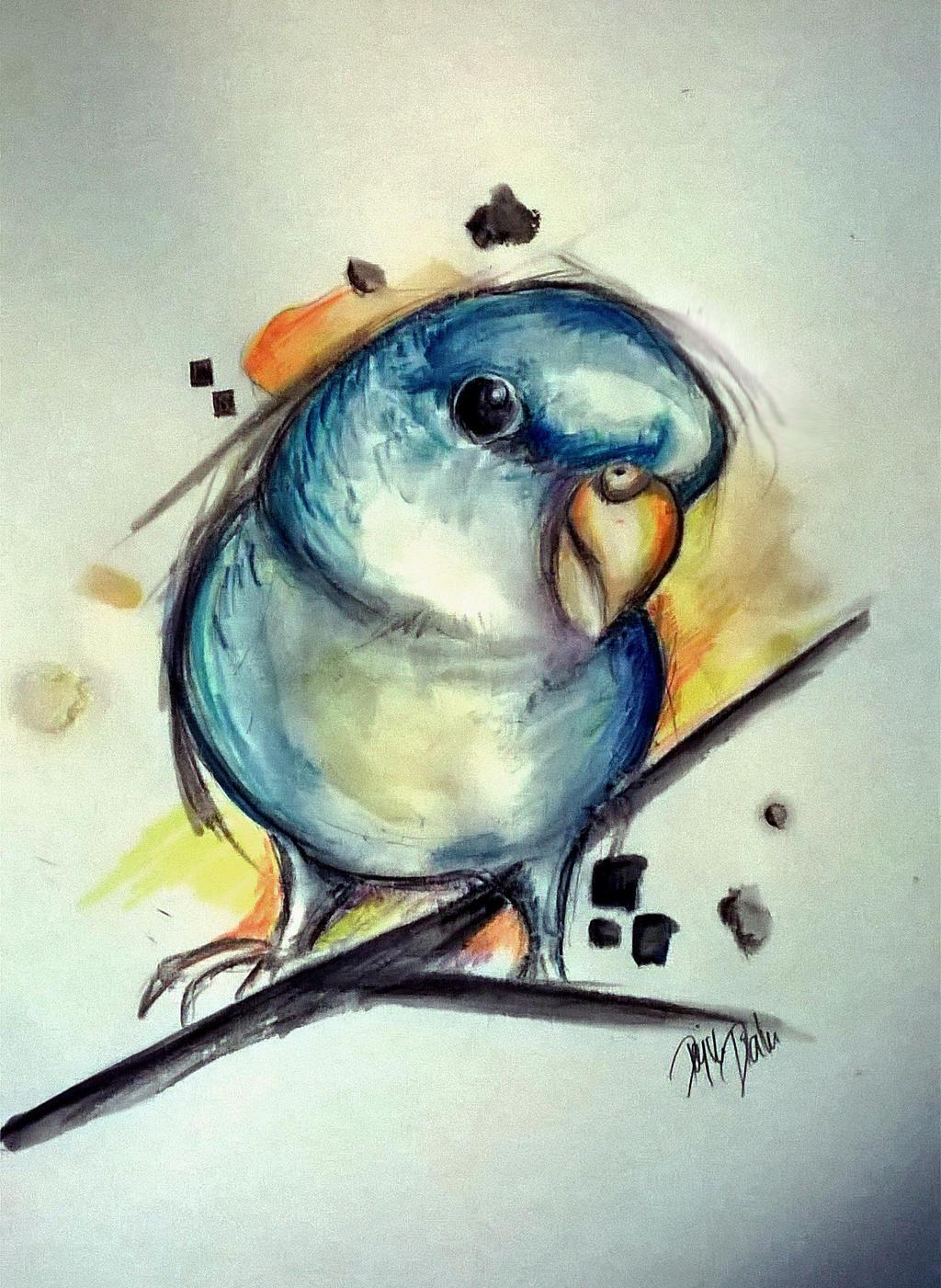 Parrot sketch by Diuus