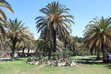 Palm tree by LomielDarkwood
