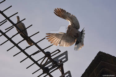 Incoming Flight