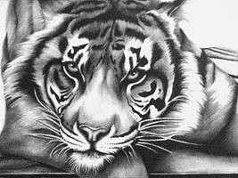 Tiger by artistelllie