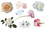 Beautiful flowers - PNG