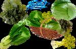 Vegetables - PNG