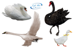 Animals - PNG