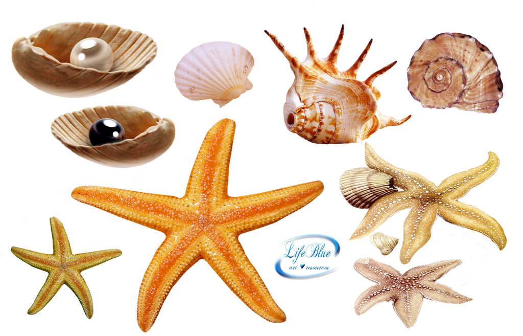 Sea creatures - PNG by lifeblue on DeviantArt