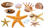 Sea creatures - PNG