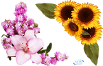 Floral corners - PNG