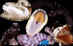 Beautiful animals - PNG