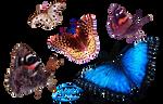 Butterflies - PNG