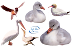 Poultry + - PNG