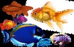 Goldfish - PNG