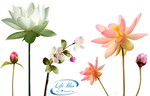 Fragrance of flowers - PNG