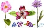 +Flowers  - PNG