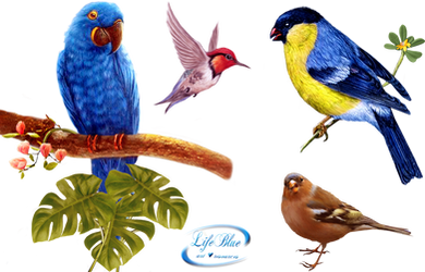 Birds - PNG by lifeblue