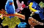 Birds - PNG