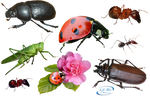 Insects - PNG