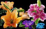 Cute flowers - PNG