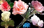 Romantic roses - PNG