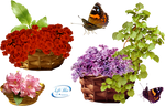 Baskets with flowers - PNG