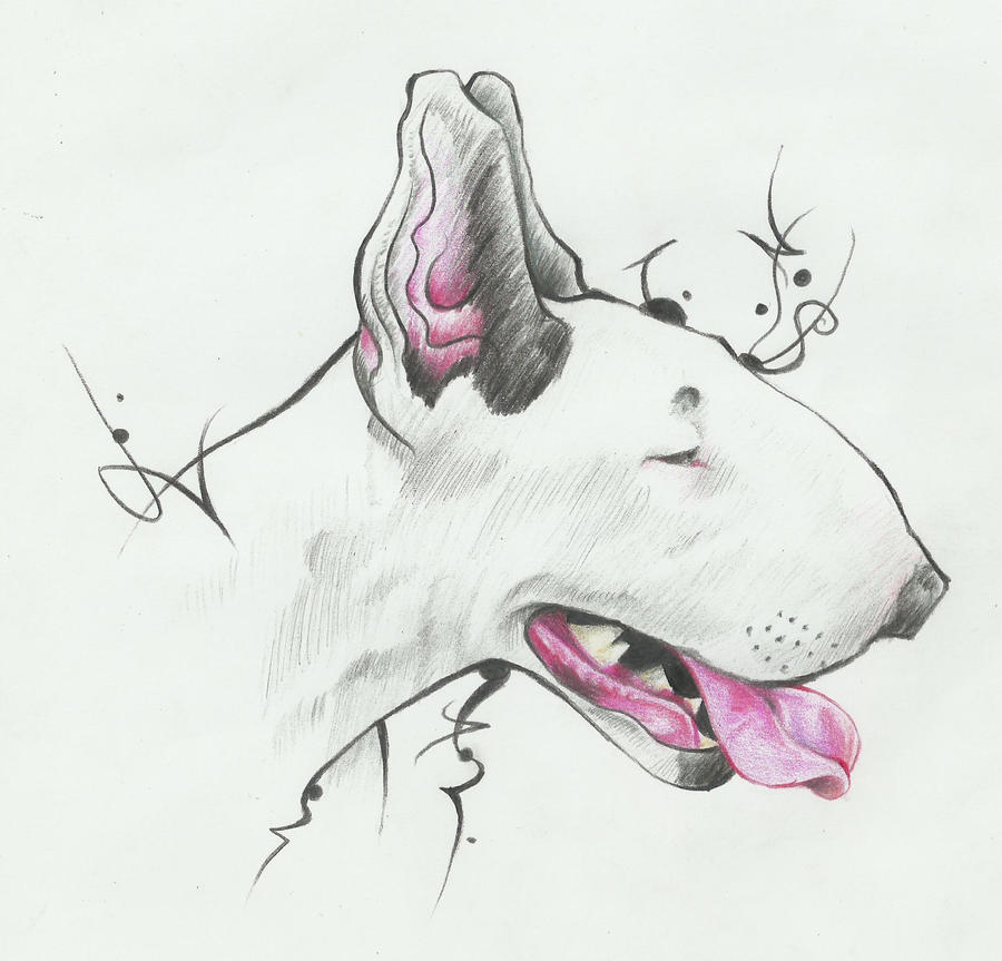 Sketch Bull Terrier By MonkeyManArtWork On DeviantArt - Bull terrier art