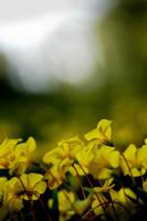 yellow community by juanfox94