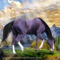 Mountain Horse Avi by Flipperruby30