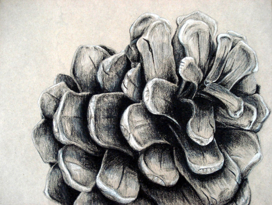 drawing pine charcoal pinecone cone natural drawings deviantart nature forms pencil object cones form painting objects still gcse pinecones sketches