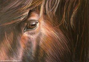 Stallion by tracybutlerart