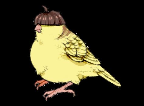 bowl cut bird