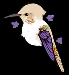 hummingbirdie