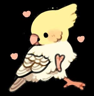 cockatiel doing a dance