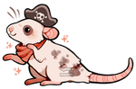 pirate rat