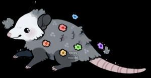 opossum blossom