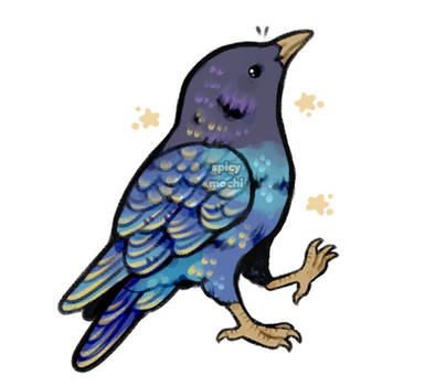 starry starling