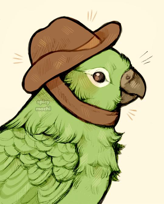 fancy hat bird