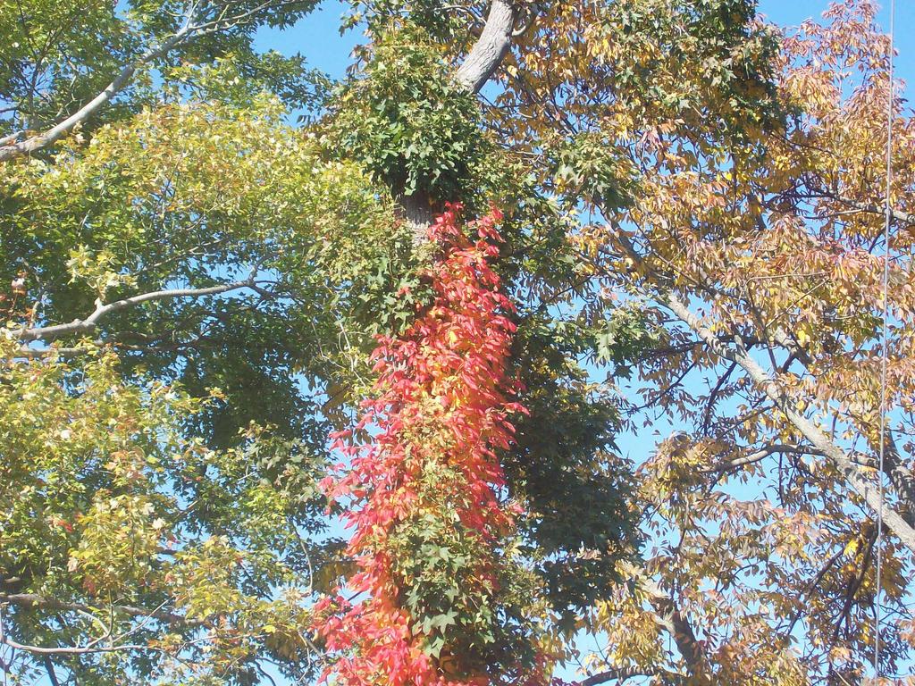 Les couleurs de l 39 automne by vampirequeeneffeffia on deviantart - Les couleurs de l automne ...