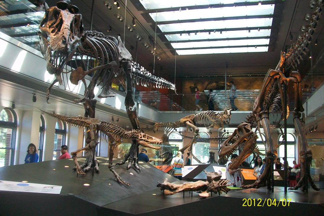 Nhmlac t rex family by pyroraptor42 on deviantart for T rex family