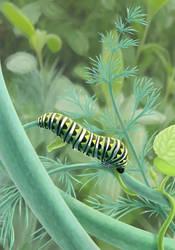 Black Swallowtail kittypillar