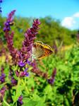 Butterfly 13-Sept-2020 by verilabelcin