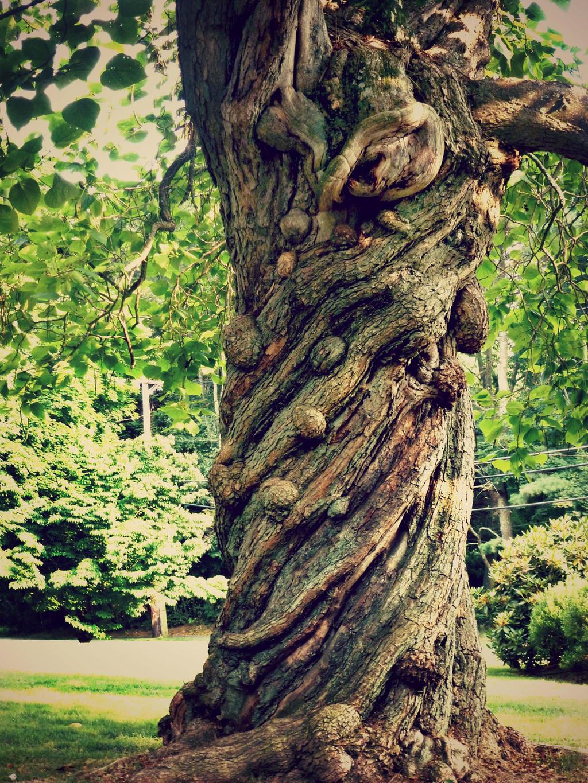 Twisting Tree by kml91225