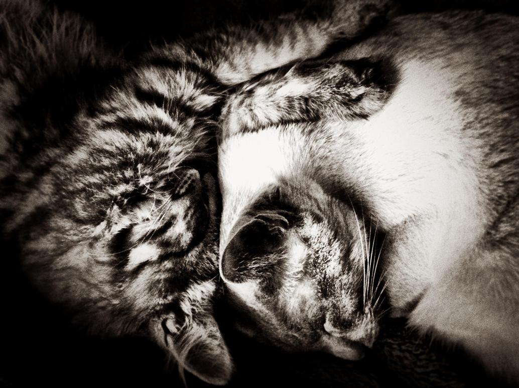Simba n Mowgli Sleeping by TearsofEndearment