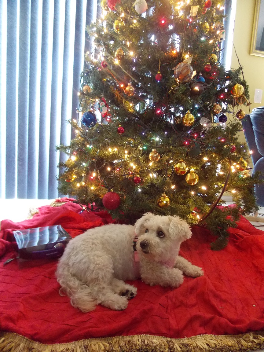 .:~*Christmas 2013*~:. by SonicPokemonPrincess