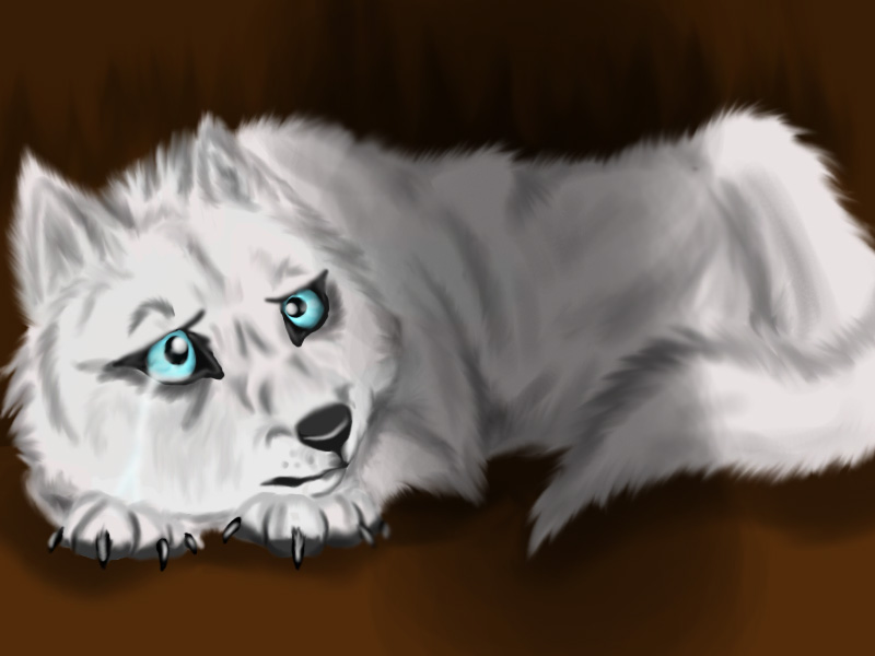 Cute white wolf pup with blue eyes - photo#19