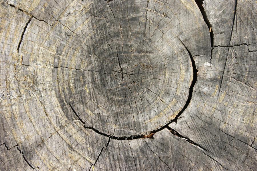 Tree Stump by hhjr