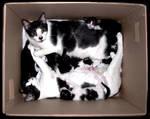 Catbox Television