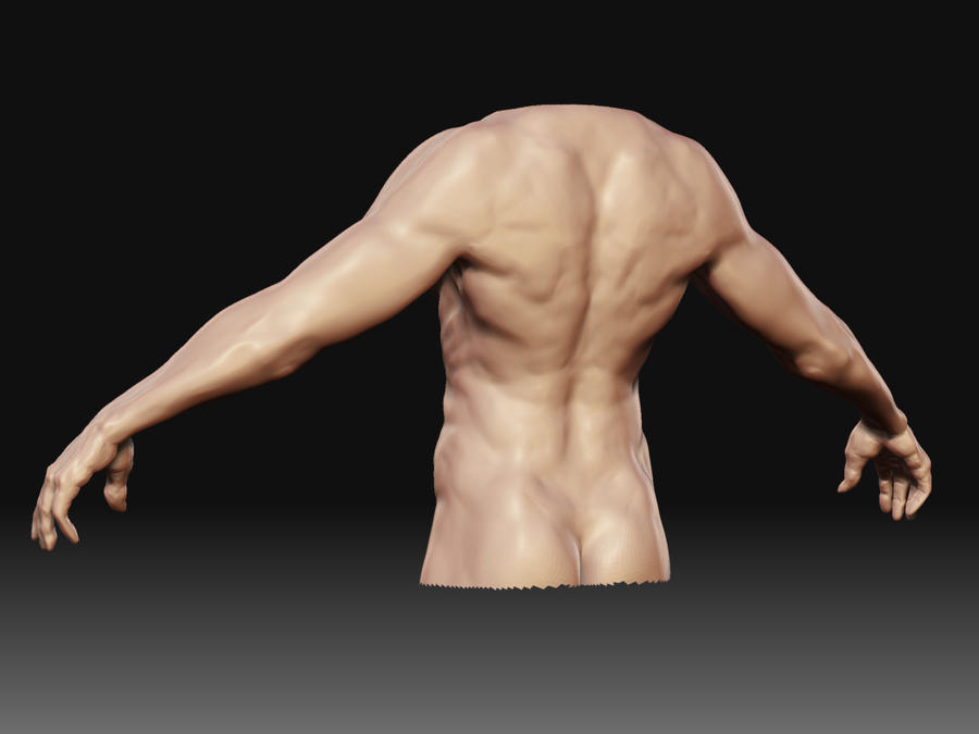 Human body back view by bullygamer17 on DeviantArt
