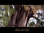 Tule tree by Daishiru