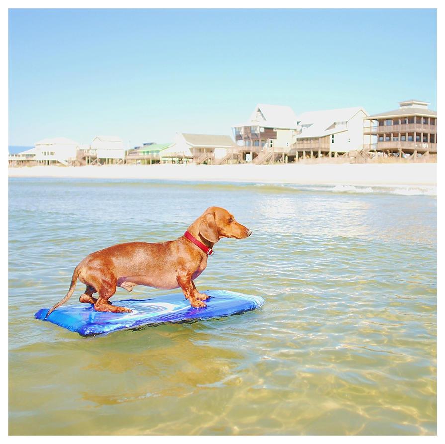 Surfdog Summer by sarahredhead