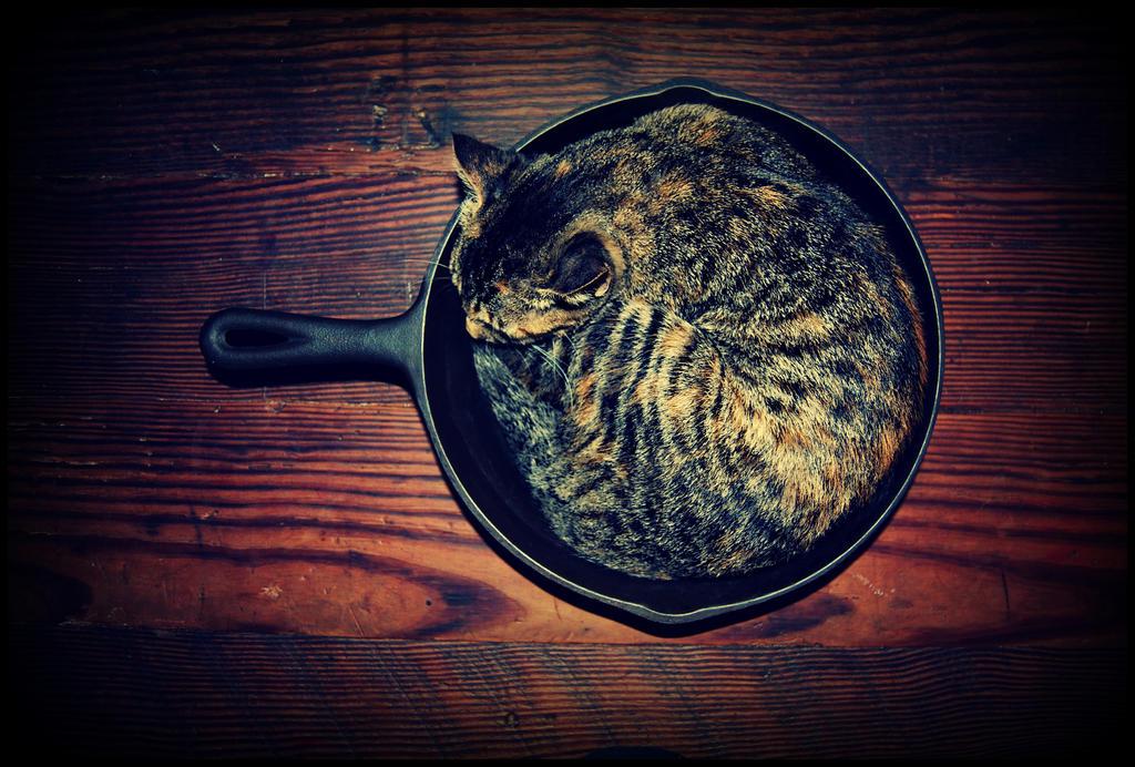 Cat CastIron by sarahredhead