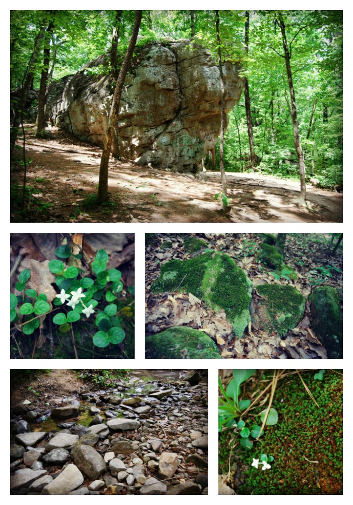 Moss Rock Preserve by sarahredhead