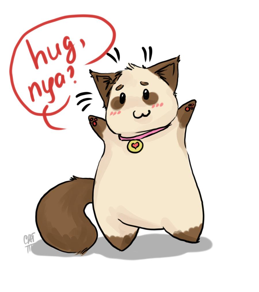 smush faced cats